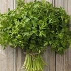 Parsley là gì? Công dụng của parsley trong nấu ăn nhiều người vẫn chưa biết đến