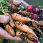 Thực phẩm hữu cơ là gì? Vì sao nên chọn mua thực phẩm hữu cơ