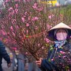 9 loại hoa chưng Tết mang may mắn tài lộc đến cho gia chủ