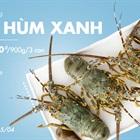 Thiết đãi cả nhà ăn sang mùa dịch với Tôm Hùm Xanh giá siêu bình dân, giảm giá 20% chỉ còn 540k