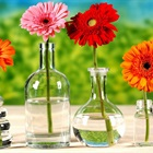 Cách giúp hoa tươi lâu
