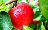 Những loại trái cây có màu đỏ nên ăn để có lợi cho sức khỏe