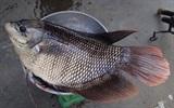 Kỹ năng đi chợ mua cá tươi ngon
