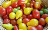 Cách trồng cà chua bi hình quả lê sai trĩu quả