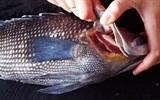 Ăn cá phần nào để ít bị nhiễm độc nhất