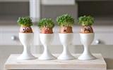 Bỏ túi những cách tái chế bất ngờ từ vỏ trứng