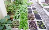 Cách cải tạo đất trồng thông minh cho vườn rau mini tại nhà luôn tươi tốt