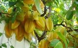 Top 10 loại cây ăn trái dễ trồng ở sân vườn nhà phố