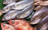 Mẹo sơ chế giúp món cá không bị tanh