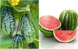 9 loại thực phẩm giúp bạn giảm béo bụng ngay lập tức