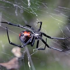 Hướng dẫn bạn cách chẩn đoán và chữa trị vết nhện cắn