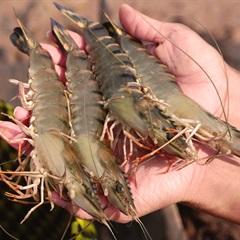Top 10 địa chỉ bán hải sản tươi sống ngon rẻ tại Sài Gòn