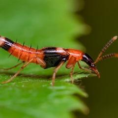 Mẹo thổi bay kiến ba khoang khỏi nhà bạn