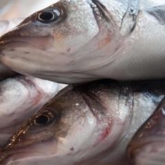 Bỏ túi 5 cách giữ cá tươi lâu mà không cần tủ lạnh cực đơn giản