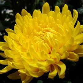 8 loại hoa nên đặt trên bàn thờ tổ tiên ngày Tết để vừa tỏ lòng thành kính vừa mang lại may mắn
