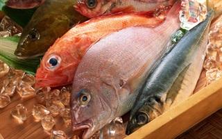 Cách nhận biết cá biển sạch và cá bị nhiễm độc
