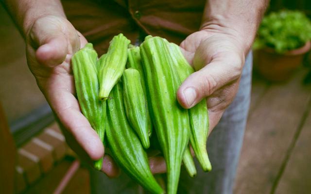 Trồng Đậu Bắp Trong Thùng Xốp Cho Quả Sai Với 5 Bước Cực Dễ   Cooky.vn