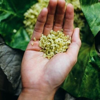 Vào bếp Hà Nội mùa thu - Nấu gì với Cốm tươi