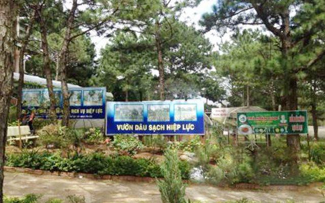 Vườn dâu Hiệp Lực - Vòng Lâm Viên