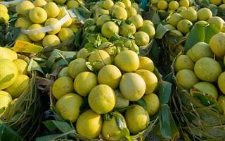 Vựa trái cây sạch Miền Tây FRESH FRUIT