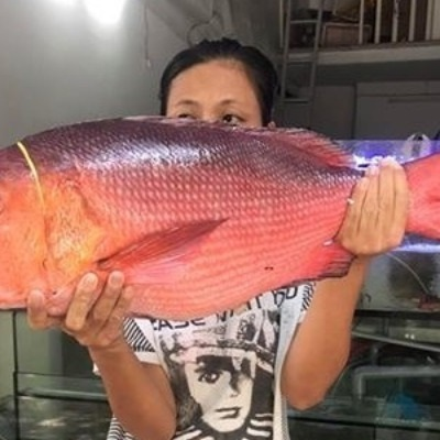Cửa hàng hải sản tươi sạch - Đại hải sản