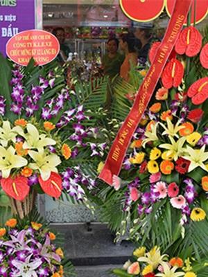 Trái Cây Tươi Klever Fruits - 6 Nguyễn Xiển
