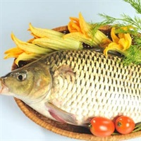 Cá chép Fresh