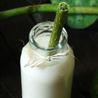 Cách Làm Sữa Hạt Sen Thơm Ngon, Cực Kỳ Bổ Dưỡng