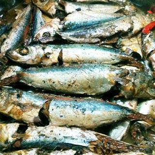 Cách làm cá nục kho mía