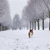Tuyết Nhung