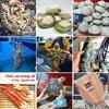 hải sản tươi sống A
