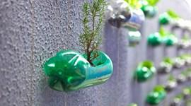 Những mẹo hay cực hữu ích từ chai nhựa p2 - Trồng cây xanh